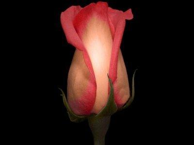 Sms de dragoste - declaratii de dragoste de sarbatori